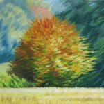 Automne Buisson / Autumn Colors