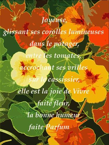 Sophie Labayle Creations Le Cèdre Rouge