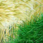 Sophie Labayle Art Paintings Nature